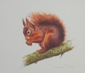 Red Squirrel- Asley Boon