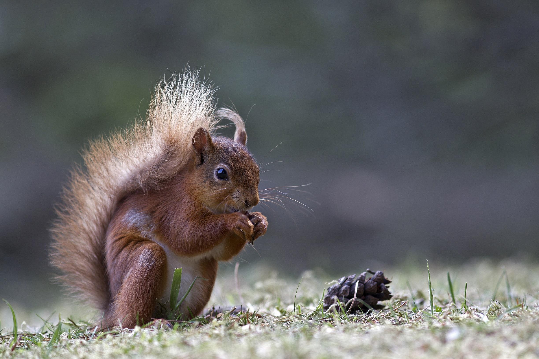 Achievement Guide: Lovin' Squirrels and Killin' Snakes. | Mend Pet