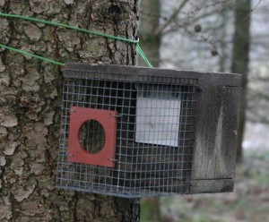 Red squirrel feeder