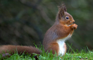 Report a Squirrel Sighting >>